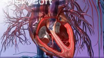 ▶ Sistema Cardiovascular
