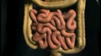 Funcionamento do Sistema Digestório