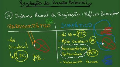Regulação da Pressão Arterial - Resumo - Fisiologia