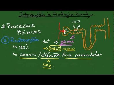 Introdução à Fisiologia Renal - Resumo - Fisiologia