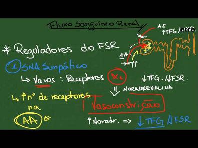 Regulação do Fluxo Sanguíneo Renal - Resumo - Fisiologia