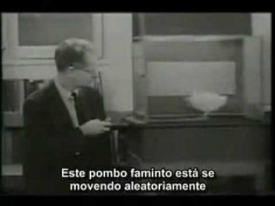 A Psicologia de B. F. Skinner (7-9).flv