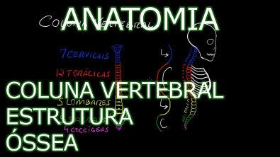 Anatomia - Coluna Vertebral #1 - Estrutura Óssea [Teoria da Medicina]