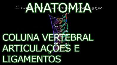 Anatomia - Coluna Vertebral #2 - Articulações e Ligamentos [Teoria da Medicina]