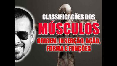 Vídeo Aula 022 - Classificação dos músculos quanto à origem, inserção, ação, forma e função