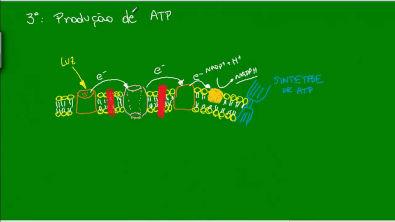 Fotossíntese -  Fases da Fotossíntese