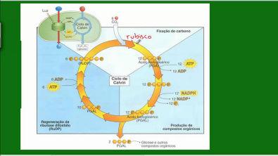 Fotossíntese - Ciclo das Pentoses
