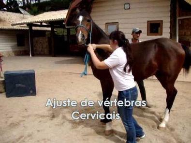 Quiropraxia Veterinária - Dra. Camila Morandini (Ajustes)