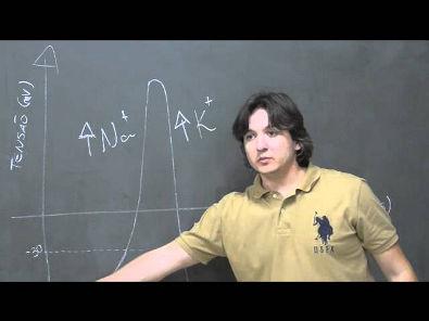Potencial de ação - Prof. Rodrigo Storck