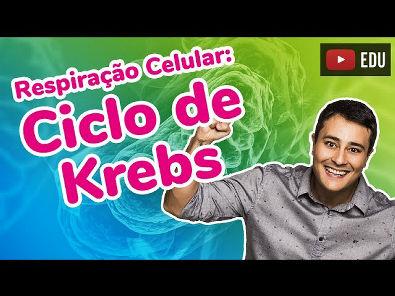 Respiração Celular - Parte 2 - Ciclo de Krebs - Prof. Paulo Jubilut