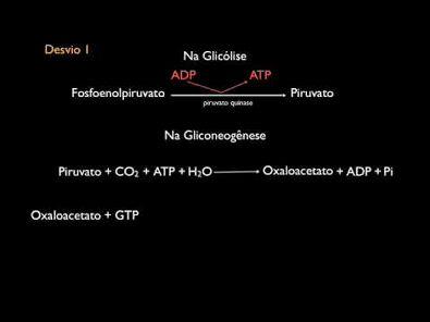 Gliconeogênese - Parte II