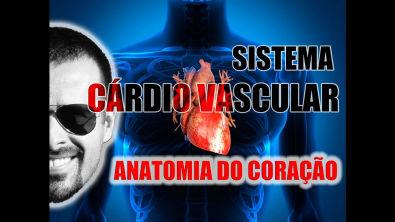 Vídeo Aula 045 - Sistema Cardiovascular: Anatomia, localização e envoltórios (camadas) do coração