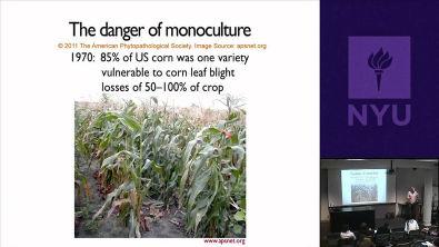 NYU OGMs (Organismos Geneticamente Modificados) e Sociedade