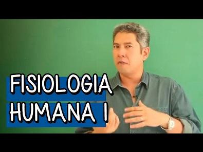 Resumo para o ENEM: Fisiologia Humana 1 - Biologia   Descomplica
