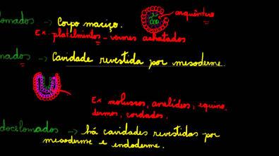 Reino animal - celomados, acelomados, pseudocelomados