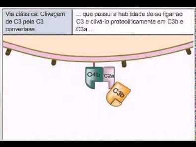Sistema complemento -  Via clássica