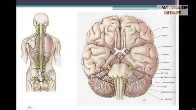 Anatomia em Debate: Sistema Nervoso (parte 1)