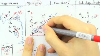 Bioquímica (Introdução 8) - Equilíbrio Ácido-Básico 4