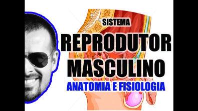 Vídeo Aula 058 - Sistema Reprodutor Masculino: Anatomia funcional dos órgãos genitais masculinos