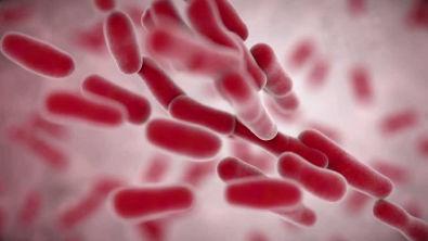 Mechanisms of Resistance in Gram-negative Bacteria to Beta-Lactam Antibiotics