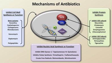 Mechanisms and Classification of Antibiotics (Antibiotics - Lecture 3)