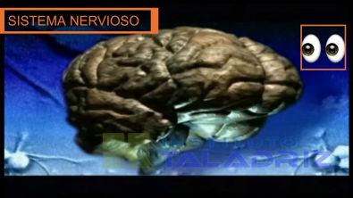 Sistema Nervioso. Neurona.