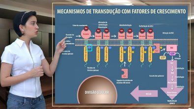 Farmacologia 04    Receptores de Quinase e Nucleares