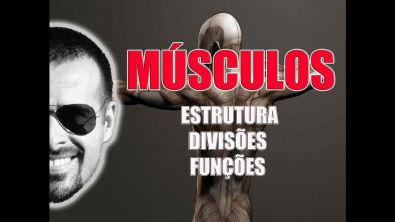 Vídeo Aula 021 - Sistema Muscular: Estrutura, divisões e funções dos músculos esqueléticos