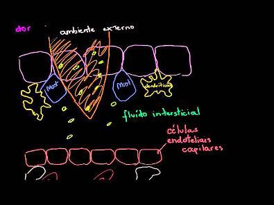 Biologia - Resposta Inflamatória (Khan Academy)