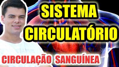 SISTEMA CIRCULATÓRIO: Fisiologia da circulação sanguínea humana