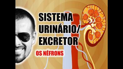 Vídeo Aula 031 - Sistema Excretor/Urinário - Néfron: A unidade funcional dos Rins