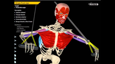 Muscle and Motion | All About Strength Training
