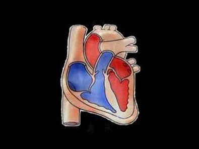A Contração Muscular (Parte 1 de 4)