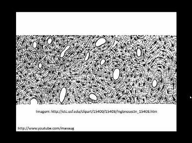 Resumo de Histologia 02 - Tecidos Conjuntivos