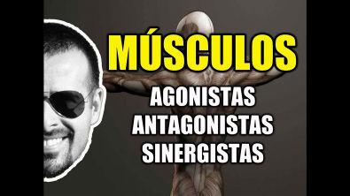 Vídeo Aula 095 - Sistema Muscular/Cinesiologia: Músculos Agonistas, Antagonistas e Sinergistas