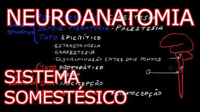 Neuroanatomia - Sistema Somestésico
