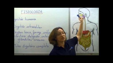 AULA BIOLOGIA   FISIOLOGIA HUMANA SISTEMA DIGESTÓRIO)   OUT 13   PROF  CAROL