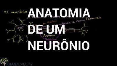 Biologia - Anatomia de um neurônio (khan Academy)
