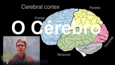 O Cérebro | Biologia Humana | Biologia | Khan Academy