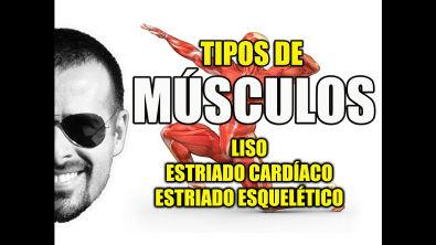 Tipos de Músculos: Liso, Estriado Cardíaco e Esquelético - Sistema Muscular - VideoAula 081