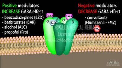 Neuroscience Basics  GABA Receptors and GABA Drugs, Animation (1)