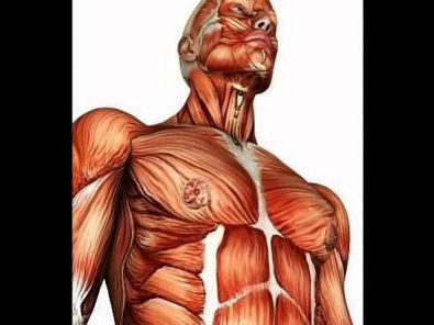 A Biomecânica da Contração Muscular