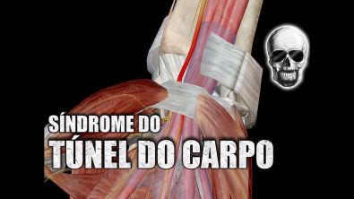 SÍNDROME do TÚNEL do CARPO e o NERVO MEDIANO   Anatomia Humana