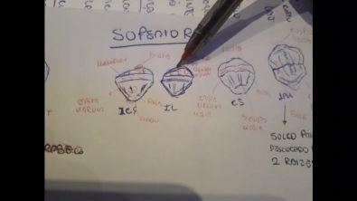 Anatomia oclusal dos dentes