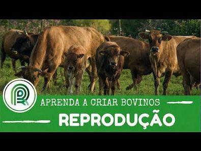Aprenda a criar bovinos - Aula 1: reprodução