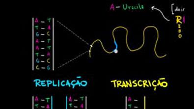 Replicação do DNA e transcrição e tradução do RNA - Macromoléculas - Biologia - Khan Academy