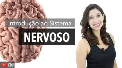 Sistema Nervoso 1/6: Introdução   Anatomia e etc