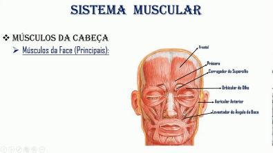 01 - Anatomia dos Músculos da cabeça