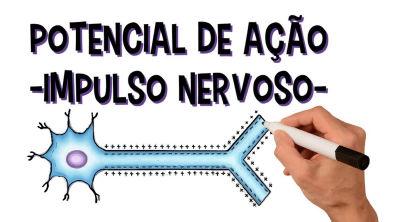Sistema nervoso: Potencial de ação   Impulso Nervoso   Despolarização   Repolarização   Refratário
