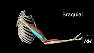 Flexão-Extensão do Cotovelo - Pronação-Supinação do Antebraço em 3D (1)